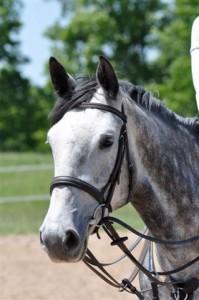 Testimonials Bayview Equestrian Centre